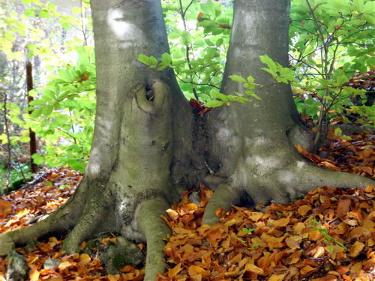 Bäume als Kraftspender