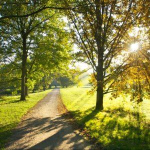 Der heilende Weg (Foto: Fotolia_36063441_M)